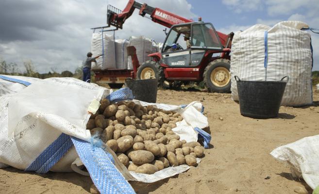 Sevilla. Andalucia. Reportaje denuncia de asociafruit sobre la situacion de la patata. 8 de mayo de 2015. Diego L.